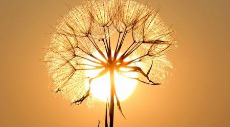 Sonnenatmung